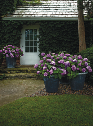 The garden just keeps on going in fall when you plant late-blooming and reblooming plants. Hydrangeas -- an all-time favorite shrub for gardeners everywhere -- are among the best reblooming performers. The Endless Summer series, which includes Bloom Struck (shown here), is one of the best.