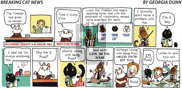 Breaking Cat News on Sunday February 3, 2019 Comic Strip