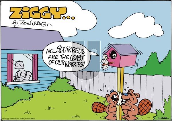 Ziggy - Sunday October 25, 2020 Comic Strip