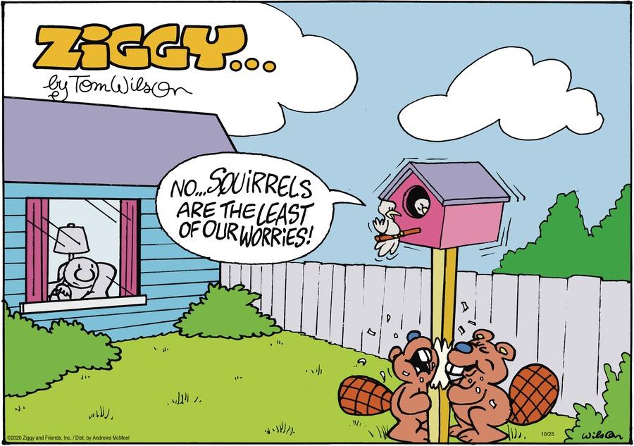 Ziggy Comic Strip for October 25, 2020