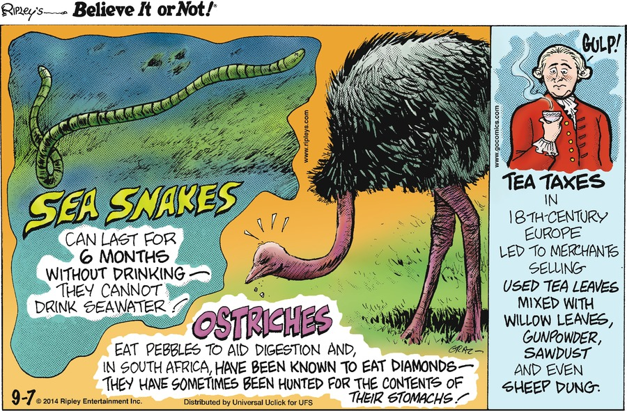 Ripley's Believe It or Not Comic Strip for September 07, 2014