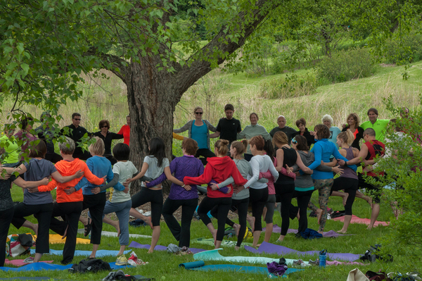 Yoga students at a summer class at Minnesota Landscape Arboretum all practice the tree pose around a venerable specimen. Yoga classes at the arboretum are popular; one class last summer had 99 participants.