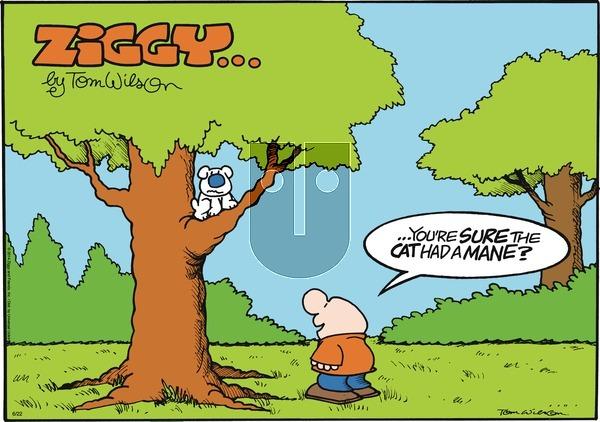 Ziggy - Sunday June 22, 2014 Comic Strip