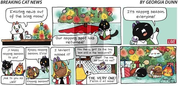 Breaking Cat News on Sunday December 13, 2020 Comic Strip
