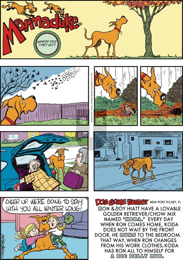 Marmaduke - Sunday November 24, 2019 Comic Strip