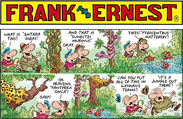 Collectible Print of frank & ernest