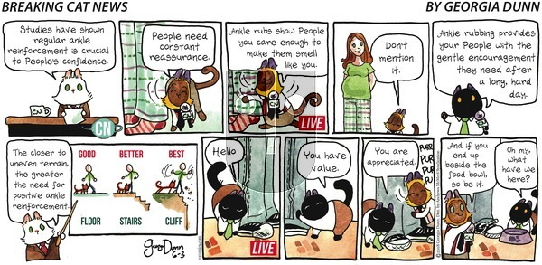 Breaking Cat News on Sunday June 3, 2018 Comic Strip