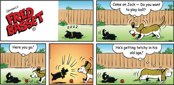 Fred Basset Comic Strip for November 21, 2010