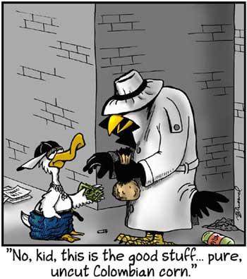 Birdbrains Comic Strip for May 27, 2021