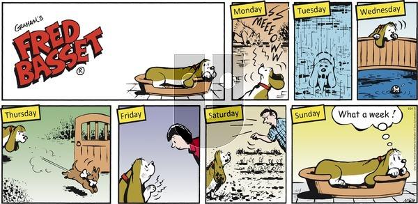 Fred Basset - Sunday May 24, 2020 Comic Strip