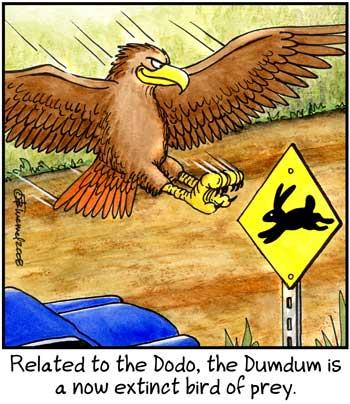 Birdbrains Comic Strip for July 03, 2021