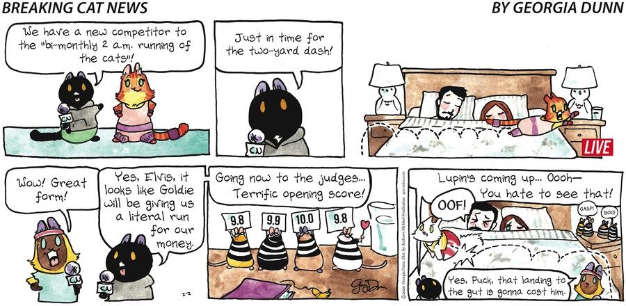 Breaking Cat News Comic Strip for February 02, 2020