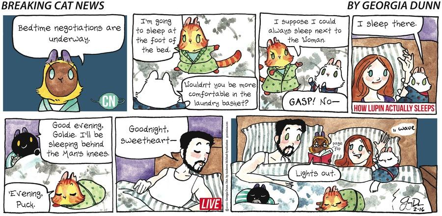 Breaking Cat News Comic Strip for February 16, 2020