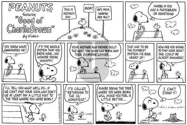Peanuts on Sunday May 11, 1980 Comic Strip
