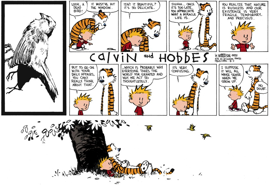 Calvin: Look, a dead bird! Hobbes: It must've hit the window.  Calvin: Isn't it beautiful? It's so delicate.  Sighhh.... Once it's too late, you appreciate what a miracle life is.  You realize that nature is ruthless and our existence is very fragile, temporary, and precious.  But to go on with your daily affairs, you can't really think about that.  ...Which is probably why everyone takes the world for granted and why we act so thoughtlessly.  It's very confusing.  I suppose it will all make sense when we grow up.  Hobbes: No doubt.