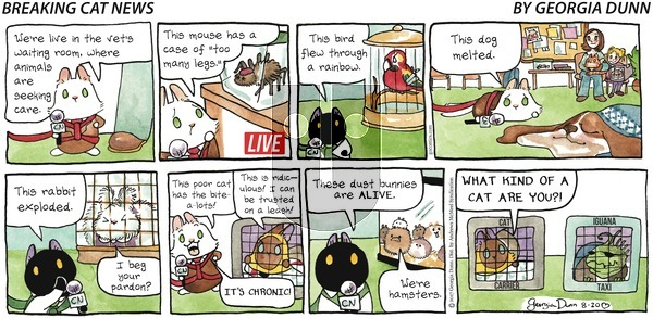Breaking Cat News on Sunday August 20, 2017 Comic Strip