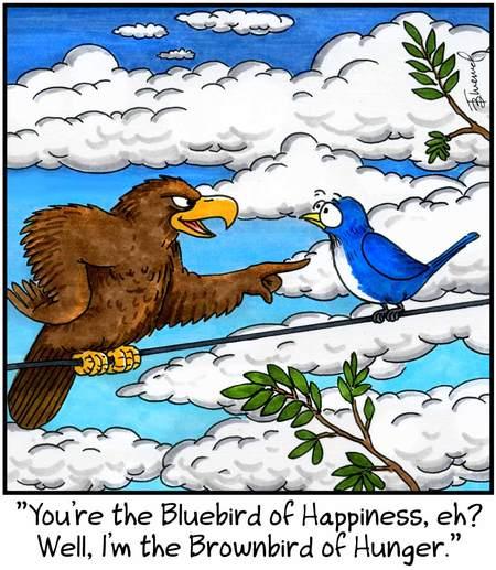 Birdbrains for Jun 11, 2013 Comic Strip