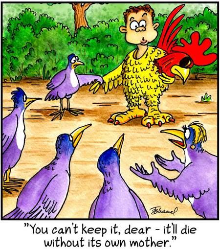 Birdbrains for Oct 3, 2012 Comic Strip