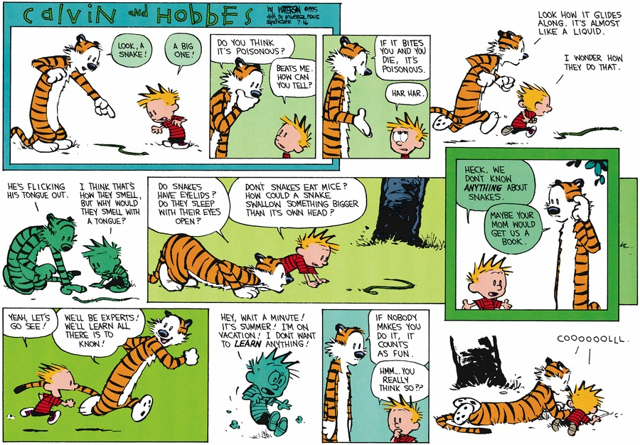 Hobbes: Look, a snake! Calvin: A big one! Hobbes: Do you think it's poisonous? Calvin: Beats me. How can you tell? Hobbes: If it bites you and you die, it's poisonous. Calvin: Har har.  Hobbes: Look how it glides along. It's almost like a liquid. Calvin: I wonder how they do that. Hobbes: He's flicking his tongue out. Calvin: I think that's how they smell, but why would they smell with a tongue?  Hobbes: Do snakes have eyelids? Do they sleep with their eyes open? Calvin: Don't snakes eat mice? How could a snake swallow something bigger than it's own head?  Heck, we don't know anything about snakes. Hobbes: Maybe your Mom would get us a book. Calvin: Yeah, let's go see! Hobbes: We'll be experts! We'll learn all there is to know! Calvin: Hey, wait a minute! It's summer! I'm on vacation! I don't want to learn anything! Hobbes: If nobody makes you do it, it counts as fun.  Calvin: Hmm..you really think so??   Calvin/Hobbes: Coooooollll.