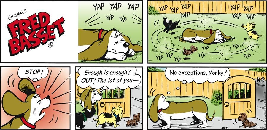 Fred Basset Comic Strip for November 30, 2014