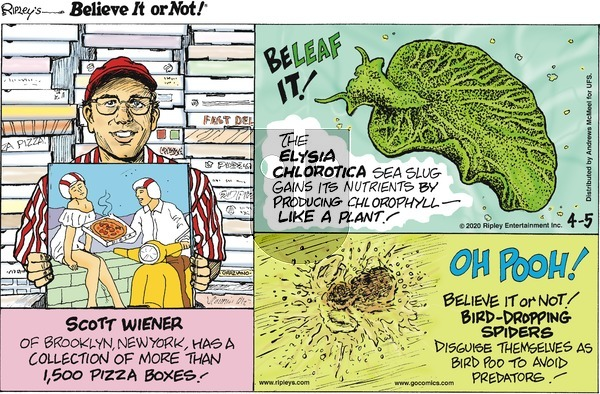 Ripley's Believe It or Not on Sunday April 5, 2020 Comic Strip
