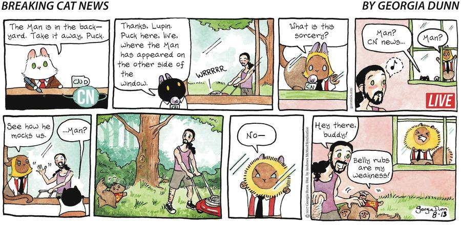 Breaking Cat News for Aug 13, 2017 Comic Strip