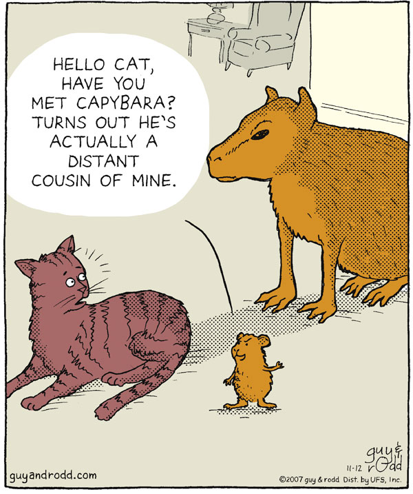"""Hello cat, have you met capybara? Turns out he's actually a distant cousin of mine."""