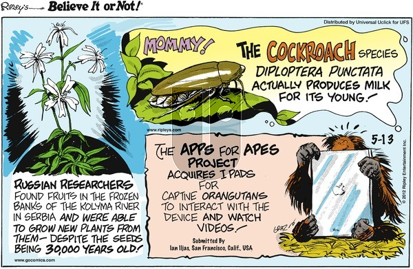Ripley's Believe It or Not on Sunday May 13, 2012 Comic Strip